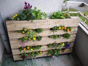 Balkonowe Uprawy Usługi Ekosystemów