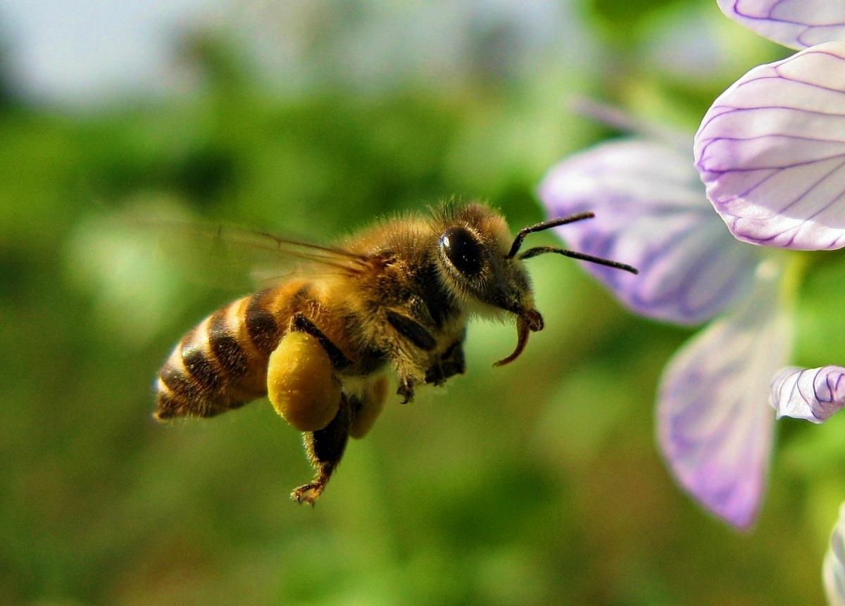 Kwiaty Dla Pszczol Uslugi Ekosystemow
